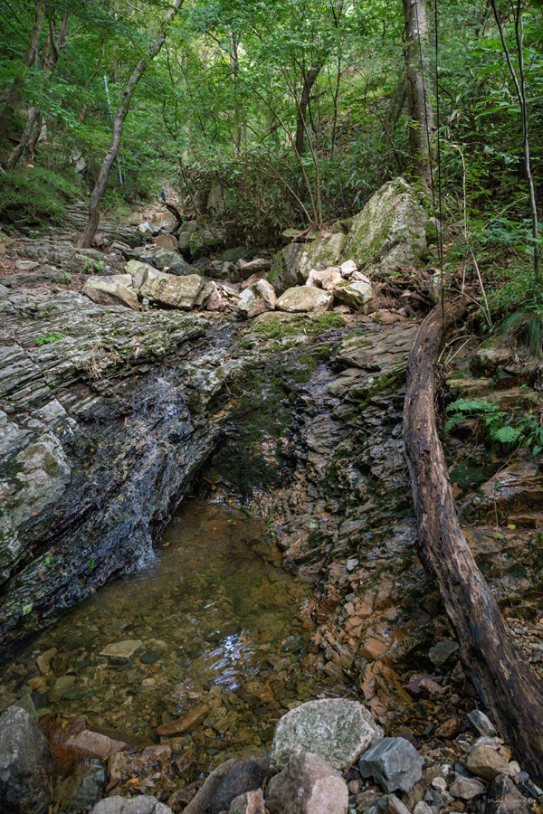 연화공주정원 생태숲