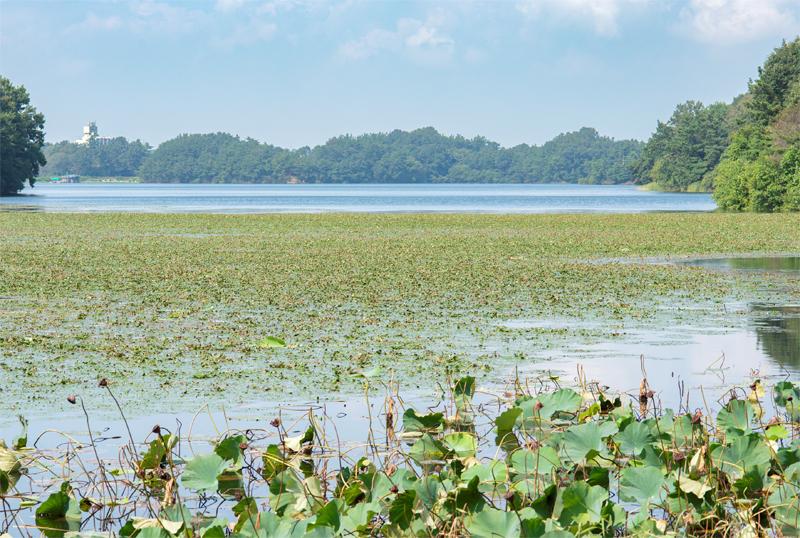 수몰의 상처를 딛고 건강한 생태자원으로 돌아온 군산 호수