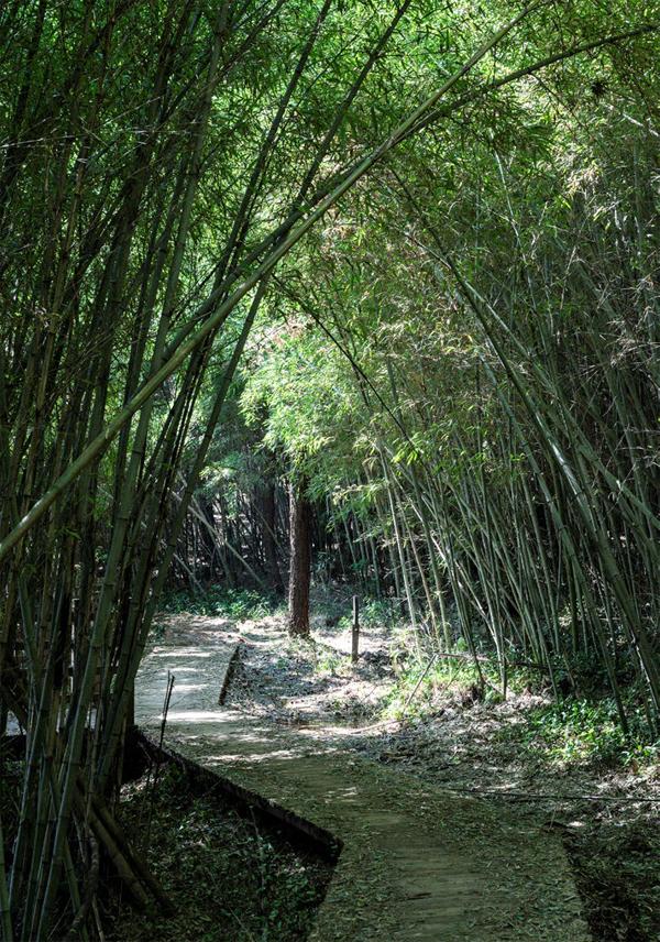 쭉쭉 뻗은 대나무숲 구간