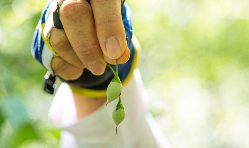 귀에 걸면 귀고리가 되는 때죽나무 열매