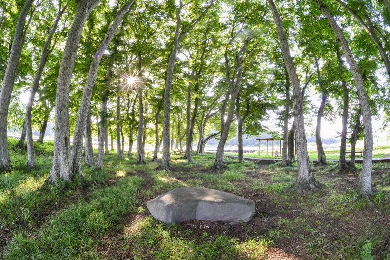 '아름다운 마을 숲'으로 꼽힌 행정마을 서어나무숲 ©JBESC