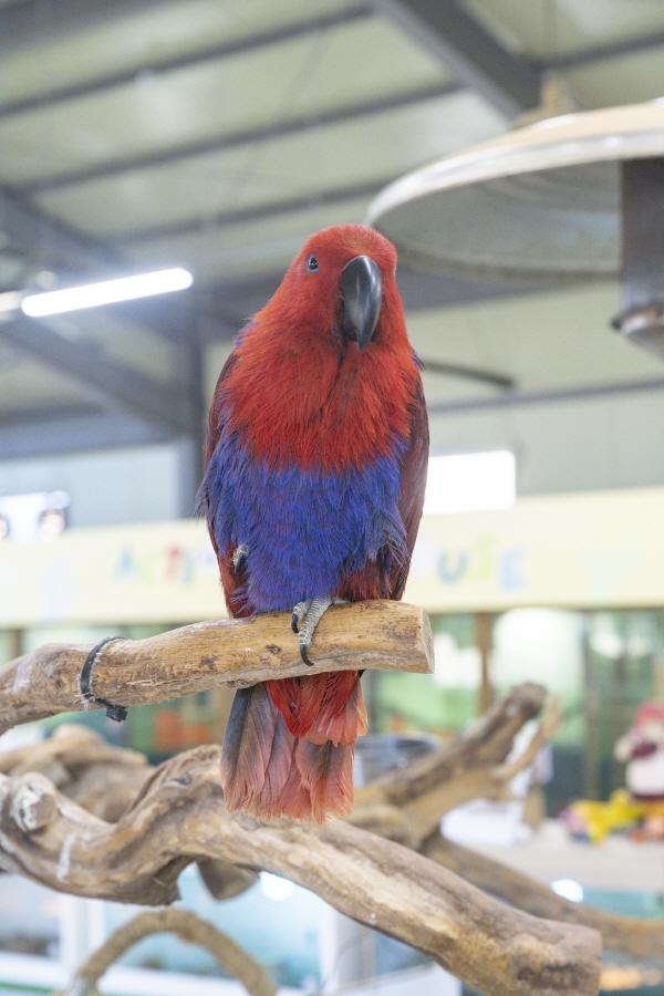 서동농촌테마공원에서는 다양한 동물