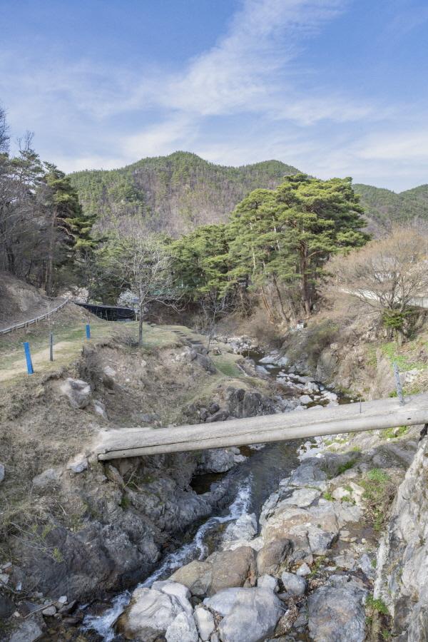 진평마을 초입의 소나무숲과 백운산에서 흘러내리는 계곡