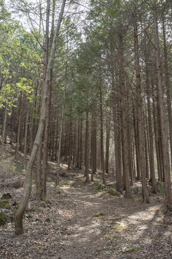 마을 주민의 관리하에 일반에게 공개된 백운산 편백숲