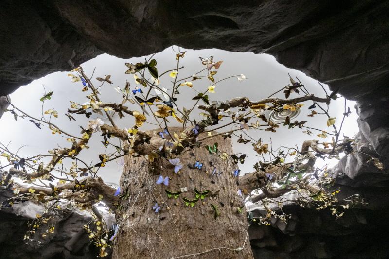나비 표본으로 장식된 나무