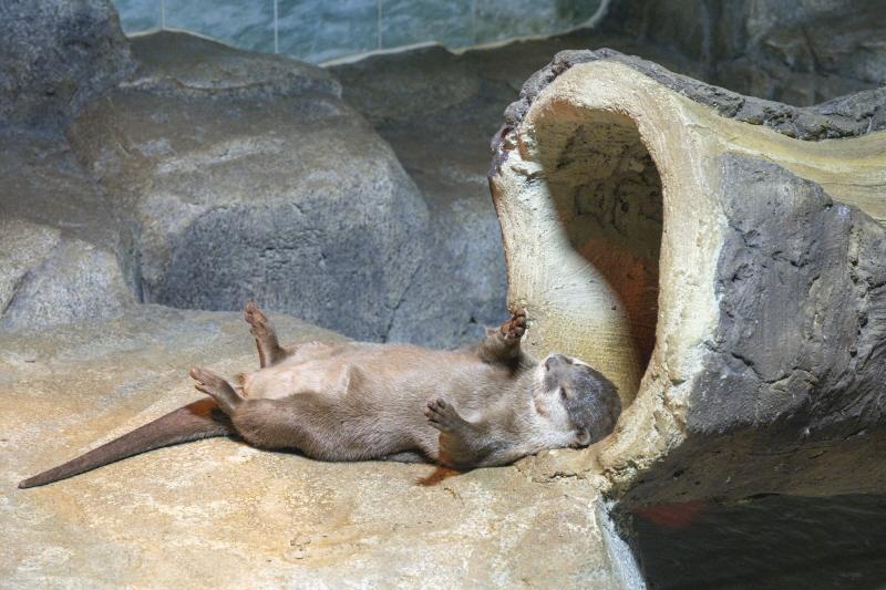 반디랜드에는 수달 한 쌍이 살고 있다